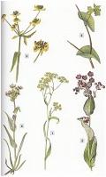 Die Pflanzen Mitteleuropas - Über 1500 Arten