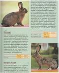 Kaninchen -  Für alle, die Freude an Kaninchen haben