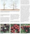 Das BLV Handbuch Obst - Obstgehölze & Beerensträucher