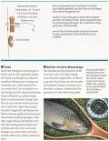 Das Praxisbuch für Fliegenfischer: Die besten Techniken Tricks Kniffe
